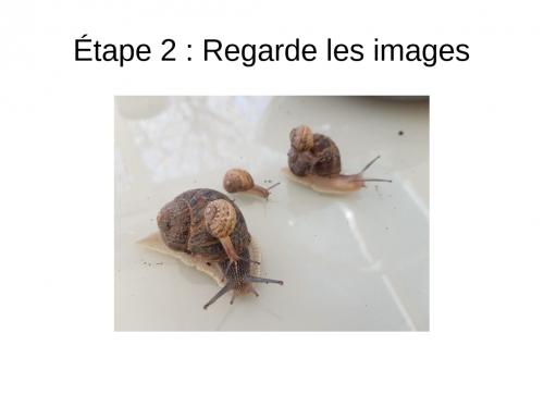 4 (8).jpg