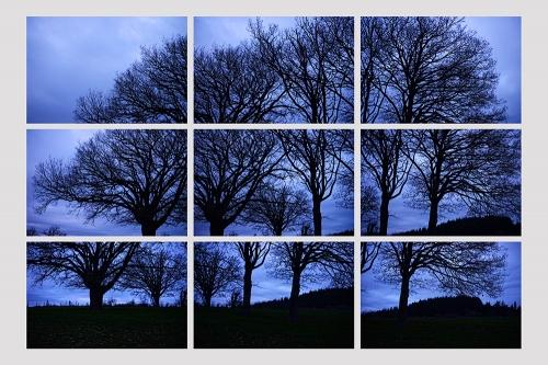 Depliant-Mathey Simon, Trois arbres, photographie imprimee sur bache, 120 x 180.jpg